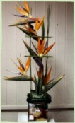 bird of paradise in a glass cube